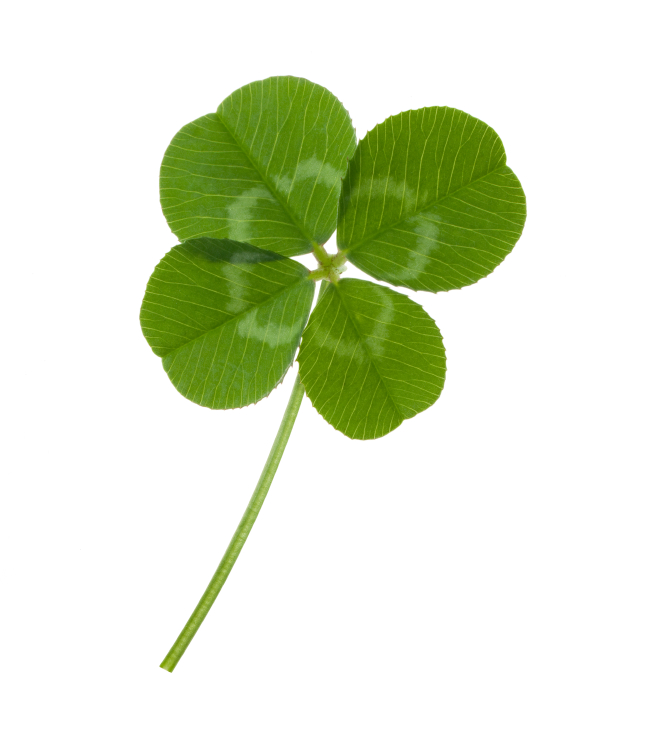 Image of a green four leaf clover